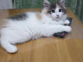 猫のお世話、掃除、飼育手伝い