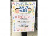 ペットショップ ワンダー 環七西新井店