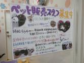 ペットショップ ケン&ワン 第二阪和鳳店