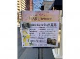cafe HAR terrace(カフェ ハル テラス)