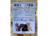 P's first for cats 武蔵小山店