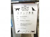 猫カフェPuchiMarry名古屋大須店