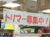ange(アンジュ)でアルバイト募集中!